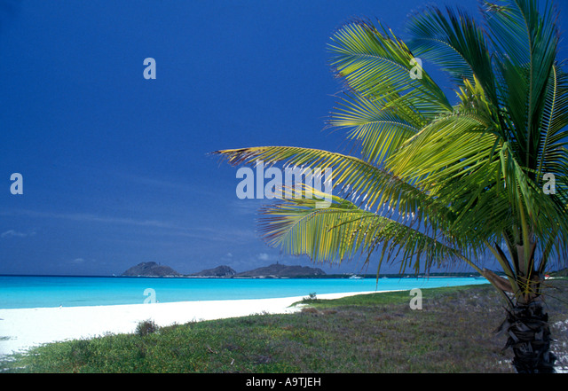 Los Roques islands Venezuela pristine deserted beach palm tree nobody - Stock Image