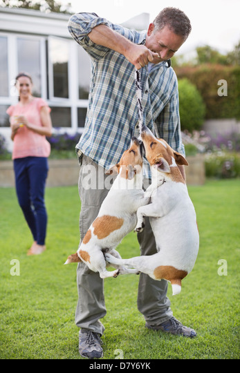 Man playing with dogs in backyard - Stock Image