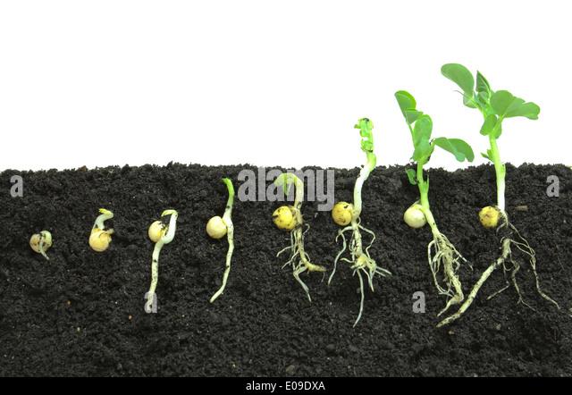 Fertile soil spring stock photos fertile soil spring for Fertile soil 07