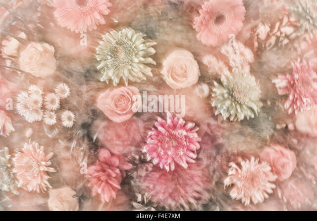 Mexico, Rancho La Puerta. Abstract impression of a flower arrangement. Credit as: Don Paulson / Jaynes Gallery / - Stock Image