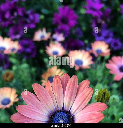 Spring daisies! - Stock-Bilder