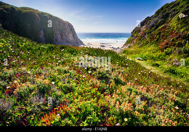 LowAngle View of a Coastal Meadow with Blooming Wildflowers, Graapate State Park, Big Sur, California - Stock Image