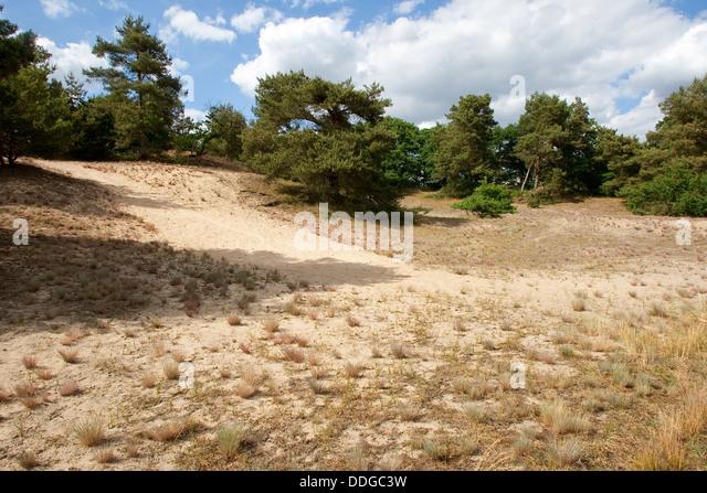 dry grassland, xeric grassland, inland dune, sandy, Trockenrasen, Trocken-Rasen, Binnendüne, Sandgebiet - Stock-Bilder