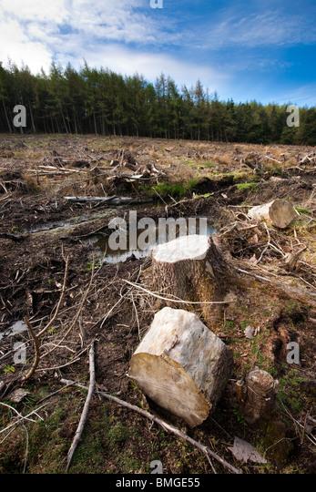 Deforestation, Nether Silton Woods, North York Moors, England - Stock Image
