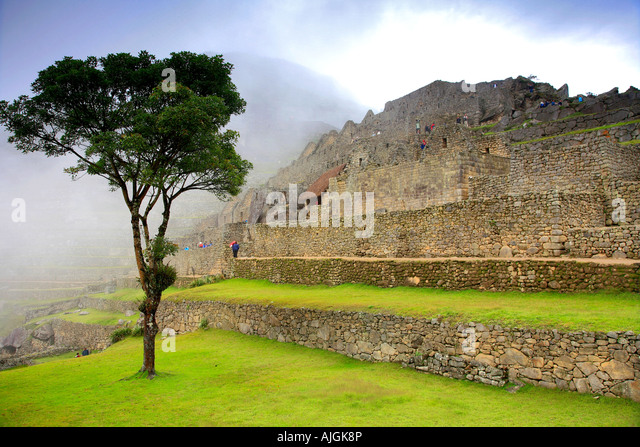 Tree in the morning mist of the urban sector of the UNESCO World Heritage Site Machu Picchu Peru Andes South America - Stock-Bilder