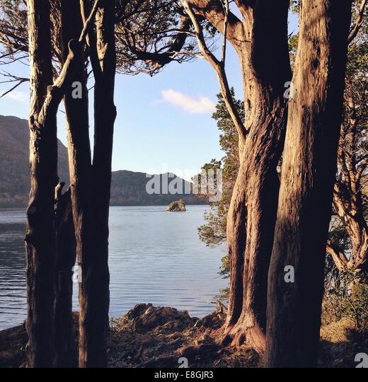 Ireland, Munster Province, County Kerry, Killarney, Trees and island - Stock-Bilder