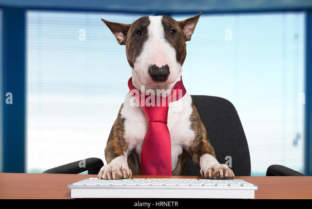 Dog Typing On Toy Computer