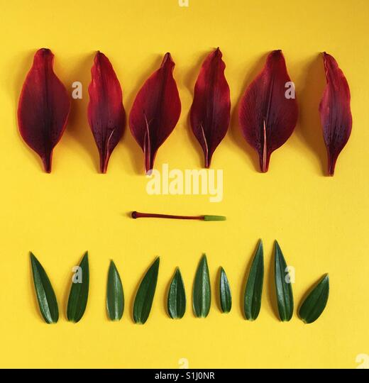 Parts of a red Asiatic Lily. - Stock Image
