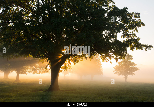 a misty morning near Milborne Port, Somerset, England, UK - Stock Image
