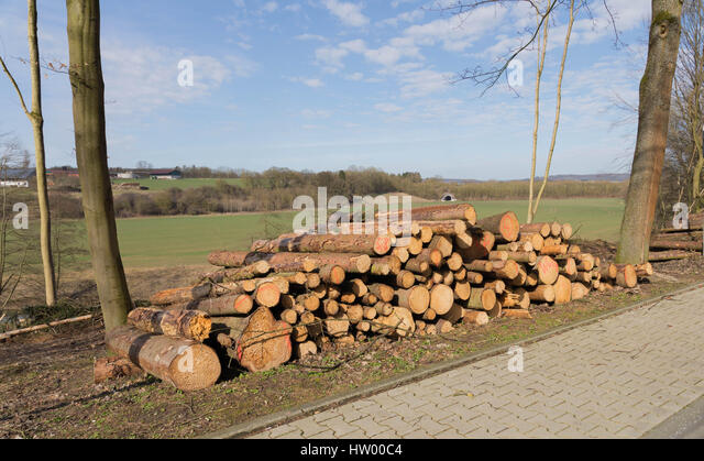 Freshly cut tree logs piled up beside the road - Stock Image