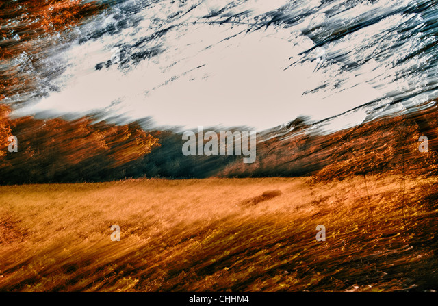 Blurred image of forest and field - Stock-Bilder