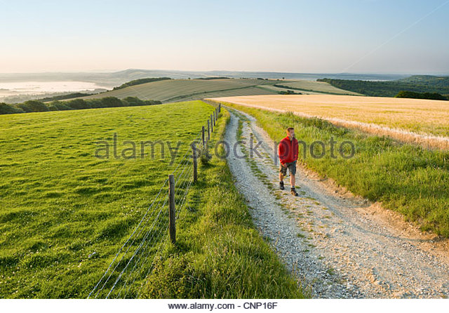 Walker on the South Downs Way near Bignor Hill, West Sussex. - Stock Image