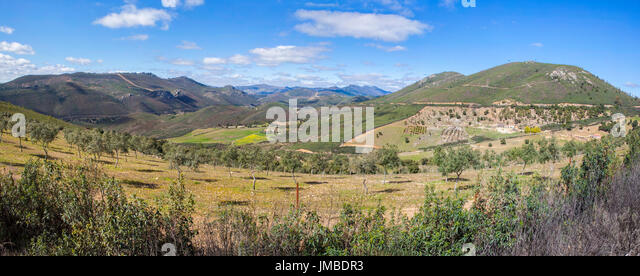 Olive trees sustainable farming at Villuercas geopark, Caceres, Extremadura, Spain. Panoramic view - Stock Image