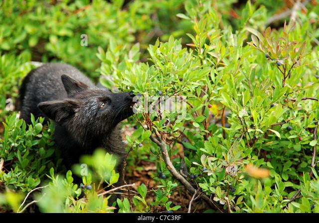 black singles in fox valley Home | fox valley health care.