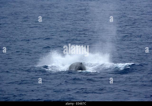 whale breathing stock photos amp whale breathing stock