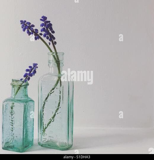 Grape hyacinths in glass medicine bottles - Stock Image
