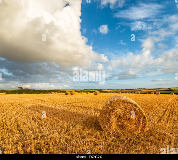 Hay stock photos