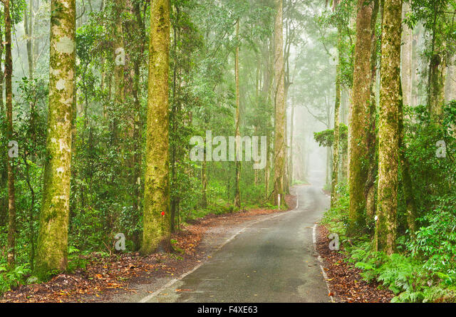 Narrow road through thick rainforest. - Stock Image
