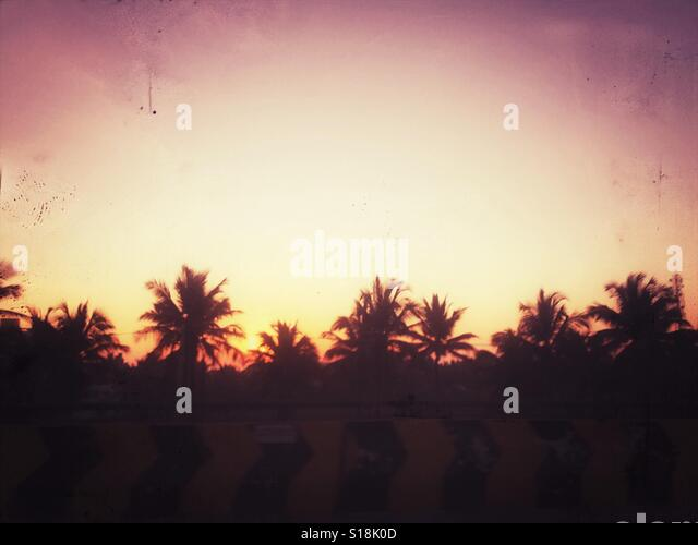 Palm trees silhouette at sunrise - Stock Image