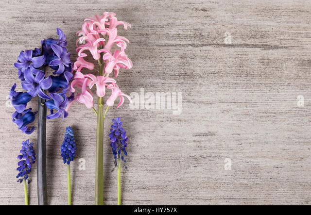 Minimalist flowers on light gray background. Plain simple background, copy space - Stock Image