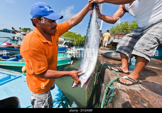 Ayora stock photos ayora stock images alamy for Local fish market