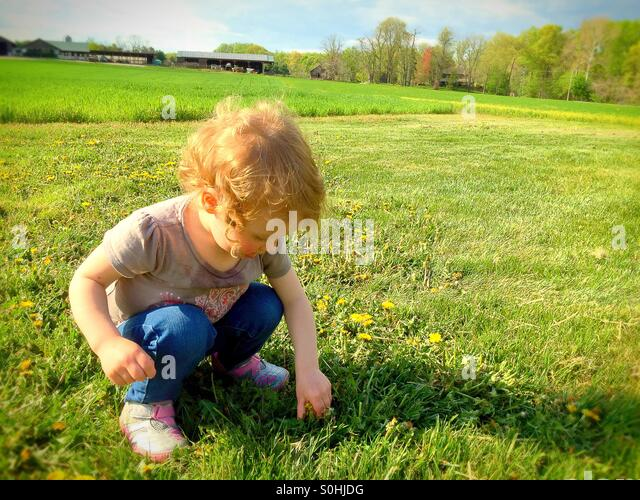 Toddler picking flowers on the farm - Stock Image