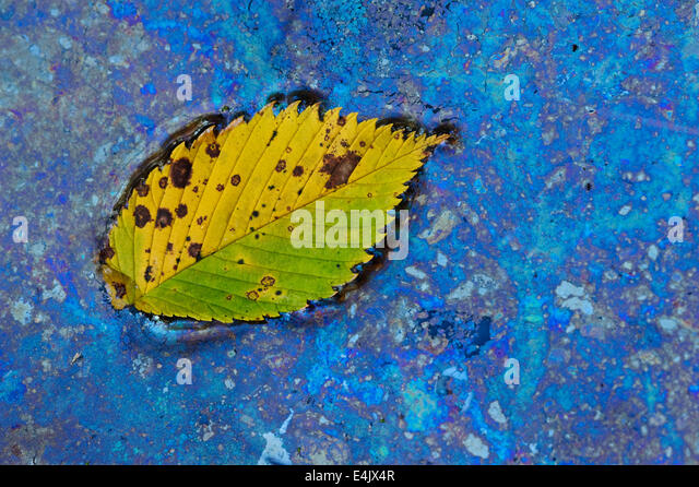 Naturally forming bacteria (Leptothrix discophora) forms around a leaf in a vernal pond, feeding on iron nutrients - Stock-Bilder