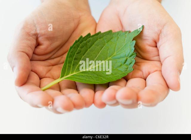 Hand holding leaf - Stock Image