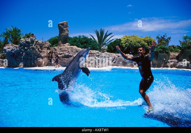 Dolphin show, Loro Parque, Puerto de la Cruz, Tenerife Canary Islands, Spain - Stock Image