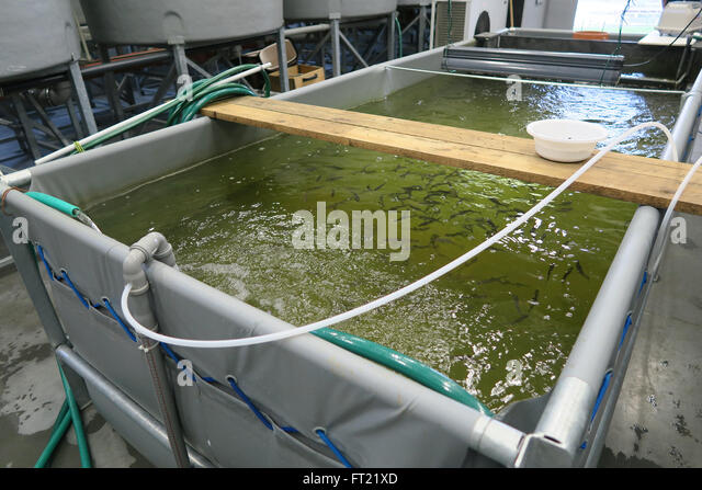 Aquaculture industry stock photos aquaculture industry for Indoor fish farming