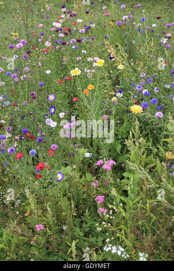 Many different flowers on a Japanese meadow, Japan, Asia. Photo by Willy Matheisl - Stock Image