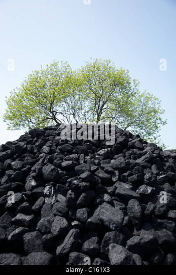 Pile of coal and tree - Stock Image