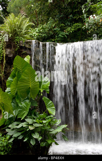 Singapore (Sanskrit for Lion City). National Orchid Garden located within the Botanic Gardens, waterfall. - Stock Image