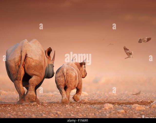 Black Rhinoceros cow and calf walking away on rocky desert plains (Digital Art) - Stock Image