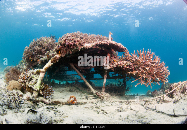 Coral encrusted biosphere in the marine reserve at Gangga Island, Sulawesi, Indonesia, Southeast Asia, Asia - Stock Image