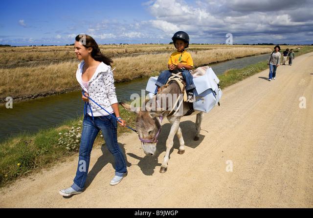 France, Vendee, Ile de Noirmoutier, donkey trek in the salt marshes - Stock Image
