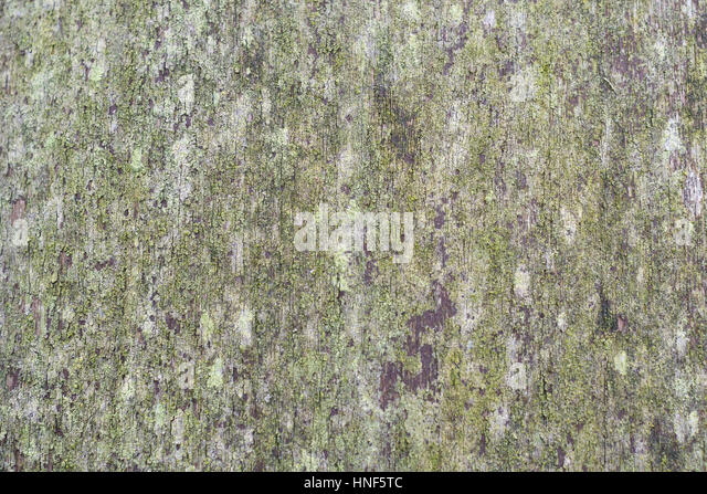 Close up of mossy old wooden door, as possible background / website texture. - Stock Image