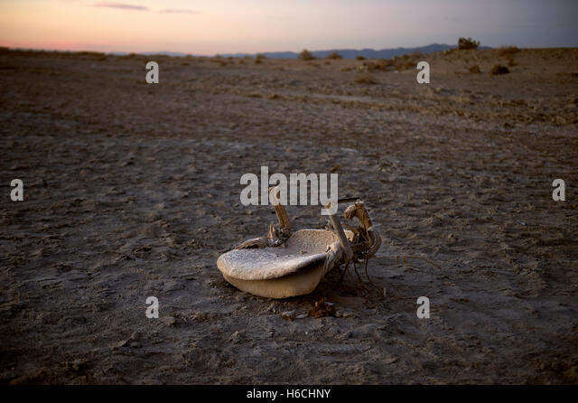Old chair on Bombay Beach at Salton Sea, California, USA. - Stock Image