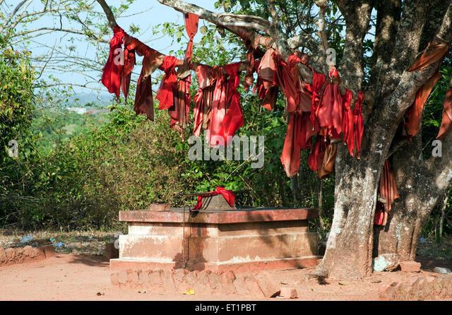 Religious cloth on tree near chittumala amman temple ; Kollam ; Kerala ; India - Stock Image