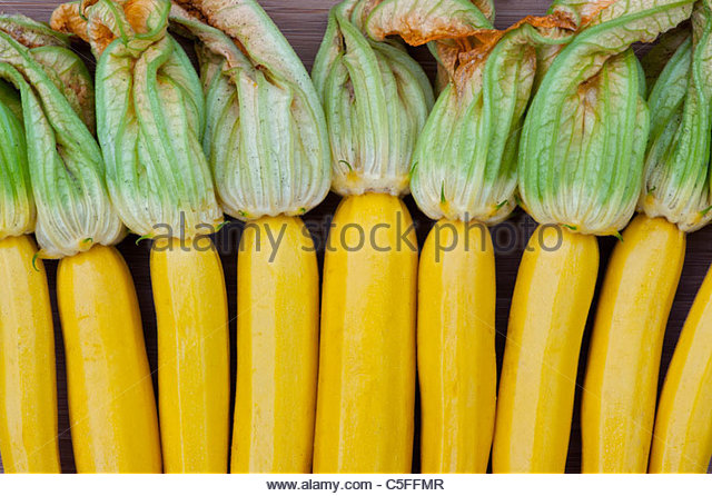 Cucurbita pepo. Row of Yellow courgette 'parador' with flowers pattern - Stock Image