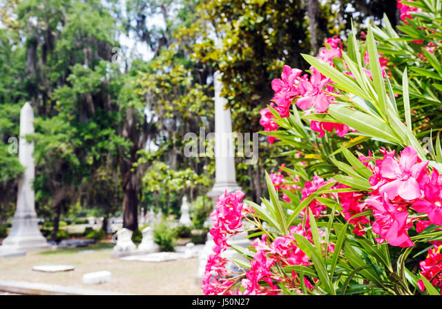 Selma Alabama Historic District Old Live Oak Cemetery pink flowers graves memorials monuments - Stock Image