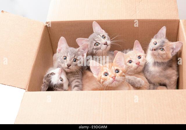 cats peeing on stuff