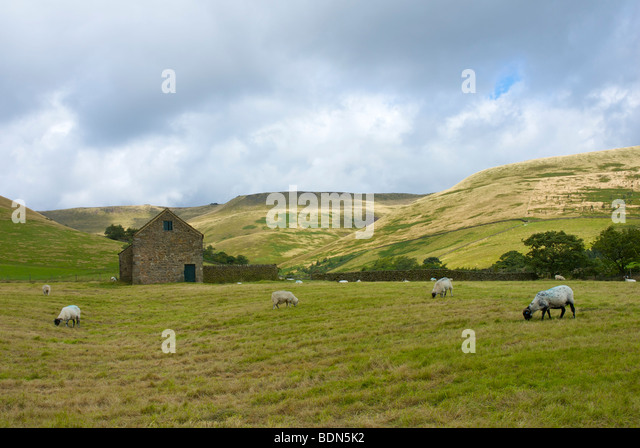 Field barn near Upper Booth, with Kinder Scout behind, near Edale, Peak National Park, Derbyshire, UK - Stock Image