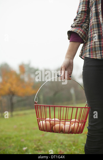 Organic farm A woman carrying a clutch of freshly laid hen's eggs in a wire basket - Stock Image