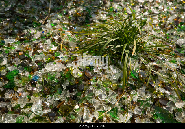 Broken glass used as a covering on a flower bed, Lerwick, Shetland Islands, Scotland, UK - Stock Image