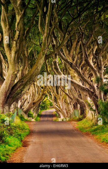 The Dark Hedges. Rural Beech tree lined road in Ireland. - Stock Image