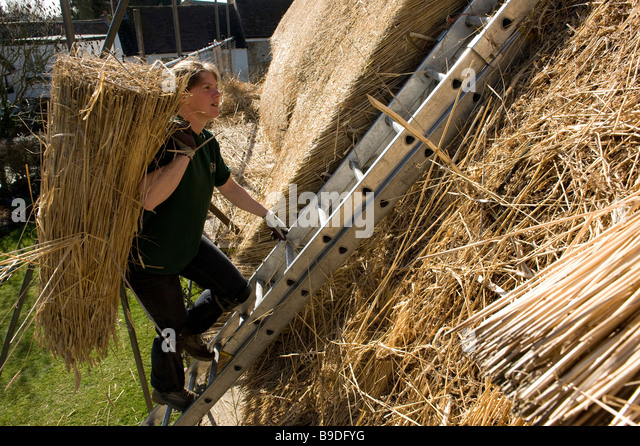 A thatcher climbs the ladder to work on a roof in Oxfordshire - Stock Image