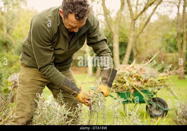 Gardener Pruning Plants - Stock Image