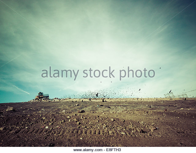 Birds and garbage truck on landfill site - Stock Image