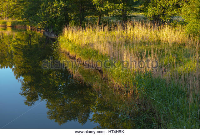 Early summer morning by a lake without a ripple. - Stock Image